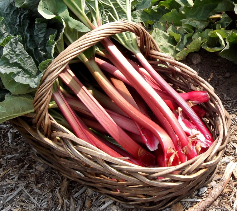 How good is rhubarb?! Image credit: pipmagazine.com.au